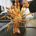 Lobster iStock_000036026002_Medium