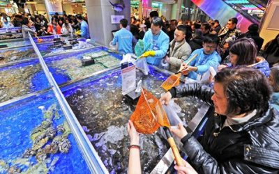 Panoply of global seafood brands populate Alibaba's Hema stores