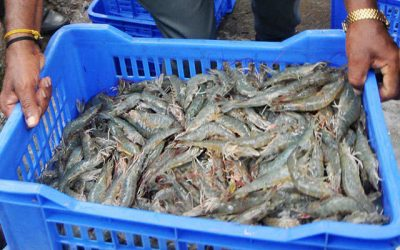Indian seafood exports to China break $1bn mark in 2019 for first time