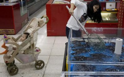 China Lowers Tariffs on More Imported Seafood Products