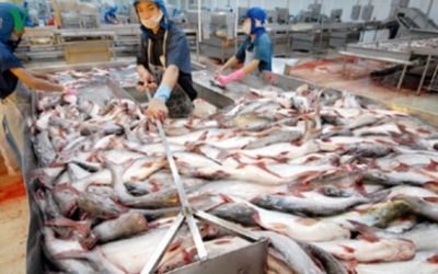 Vietnam Sees Greater Seafood Consumption and Better Prospect in Chinese Market